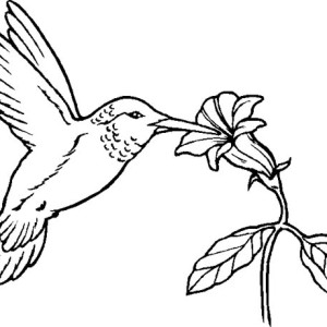 Hummingbird Flying Coloring Page