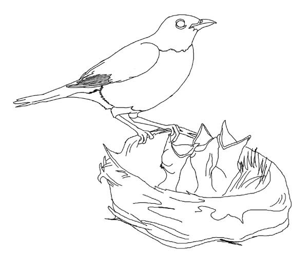 Hungry Robin Babies Coloring Page