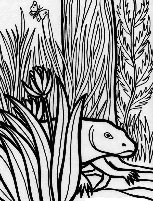Komodo Dragon Rainforest Reptile Coloring Page Download Print