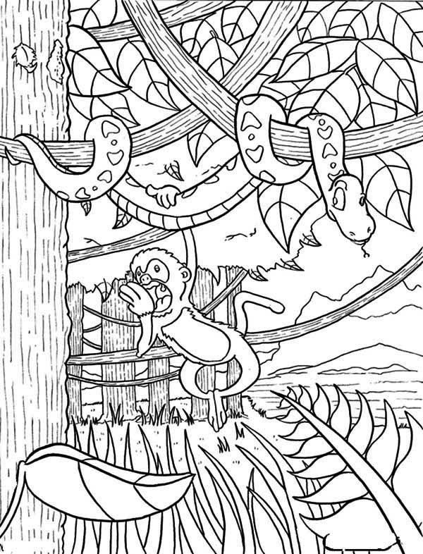 Monkey Hanging On Snake Rainforest Coloring Page Download Print