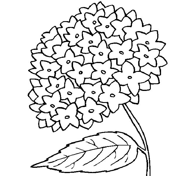 online flower coloring pages - photo#23