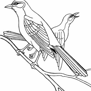 Northern Mockingbird Coloring Page
