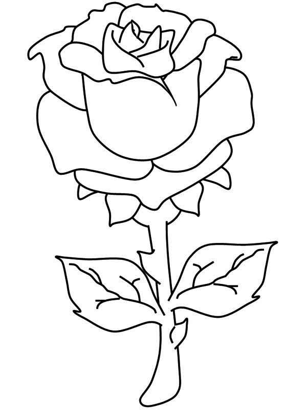 One Beautiful Rose Coloring Page