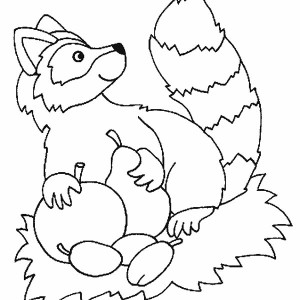 Raccoon Collecting Fruits Coloring Page