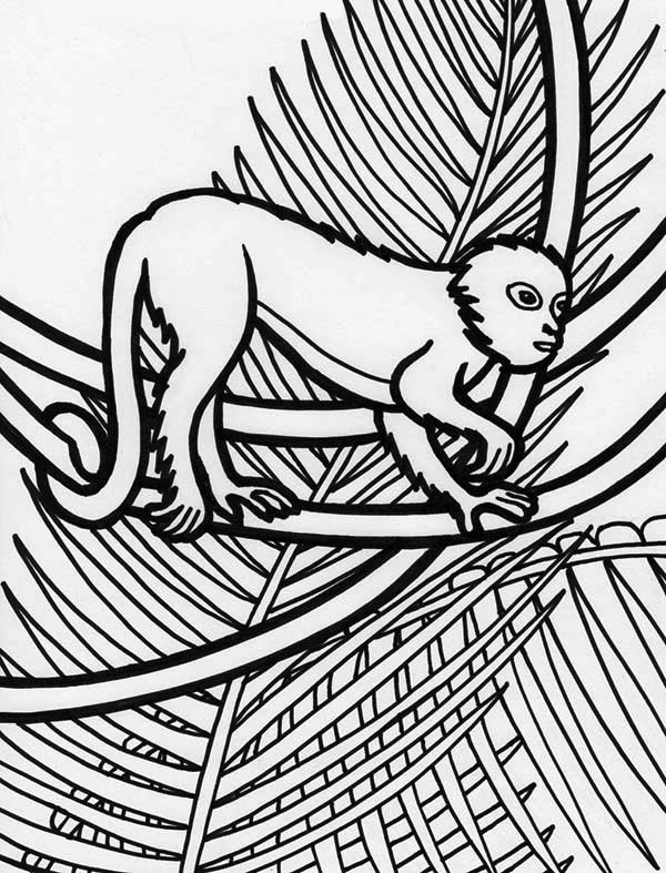 Print Rainforest Monkey Coloring Page In Full Size
