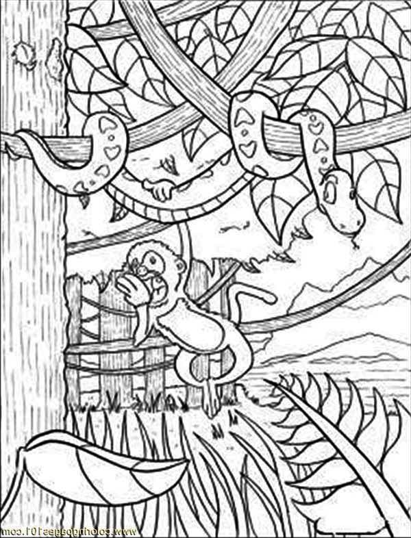 Rainforest Snake And Monkey Coloring