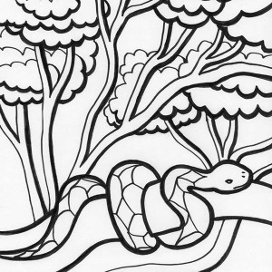 Rainforest Snake On Tree Coloring Page