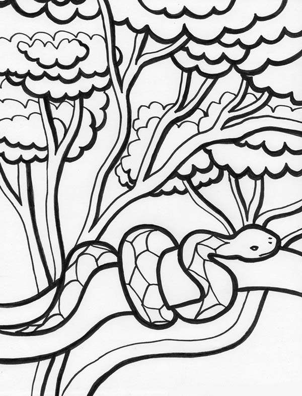 Rainforest Snake On Tree Coloring Page - Download & Print Online ...