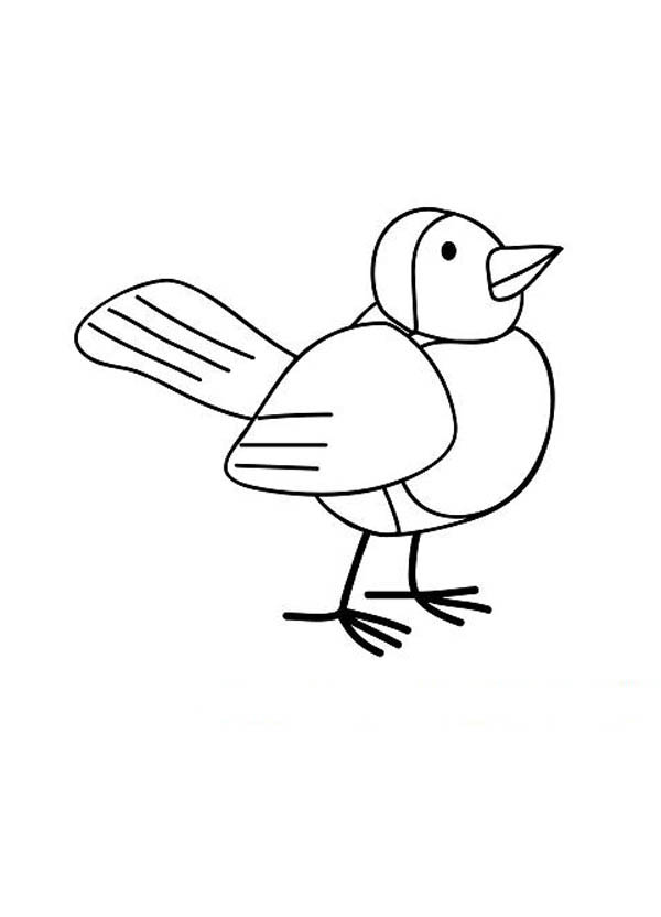 Robin Bird Drawing Coloring Page Download Print Online