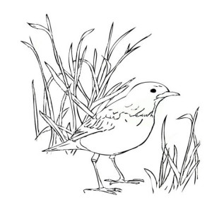 Robin Bird Standing On The Ground Coloring Page