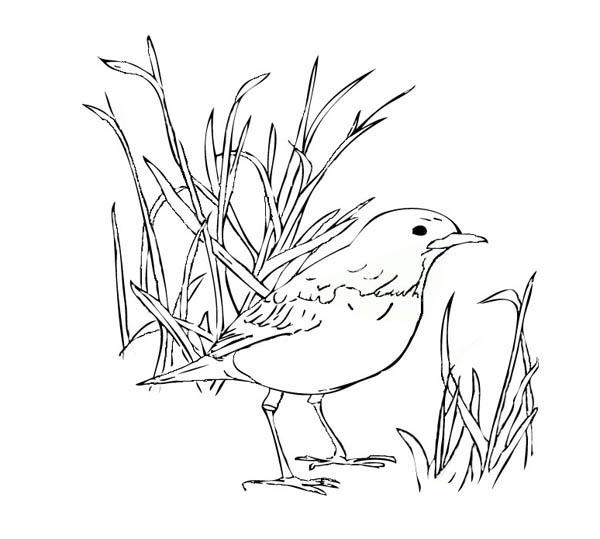 Robin Bird Standing On The Ground Coloring Page - Download ...