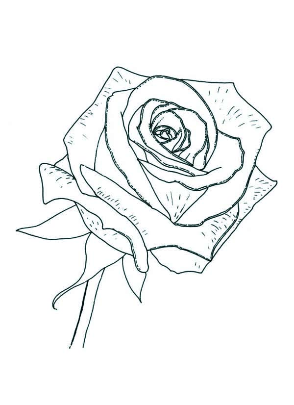 Rose Coloring Page - Download & Print Online Coloring ...
