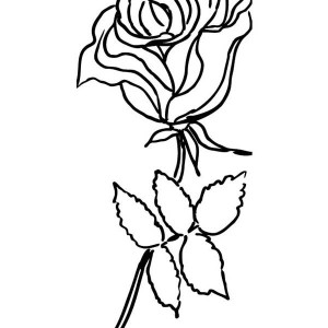 Rose From Garden Coloring Page