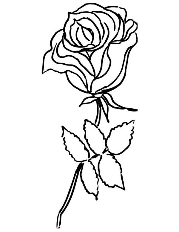 garden winter coloring pages | Rose From Garden Coloring Page - Download & Print Online ...