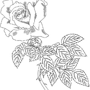 Rose Has Torn Coloring Page