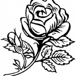 Rose Is Beautiful Flower Coloring Page