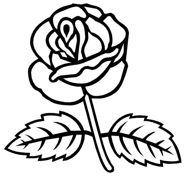 Rose With Two Leaves Coloring Page Download Print Online