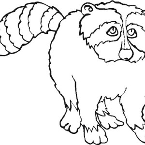 Sad Raccoon Coloring Page