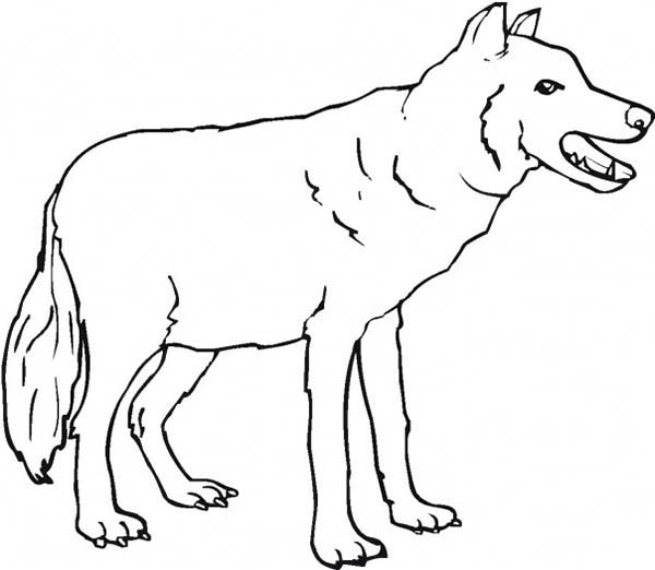 Scary Wolf Coloring Page Download Amp Print Online Coloring Pages For Free Color Nimbus