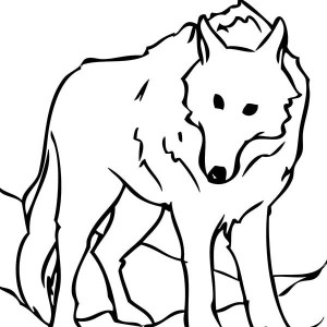 Snow Wolf Coloring Page