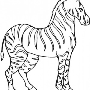 Stallion Zebra Coloring Page