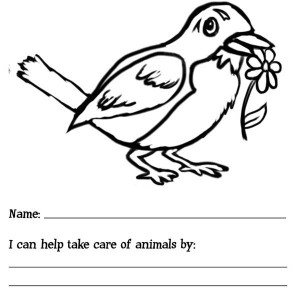 The American Robin Bird Coloring Page