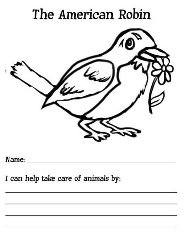 Robin bird coloring pages for kids ~ The American Robin Bird Coloring Page - Download & Print ...