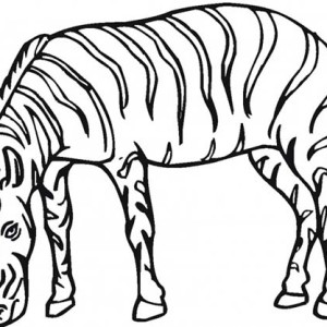 The Plains Zebra Coloring Page