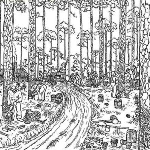 Trees Logging Rainforest Coloring Page