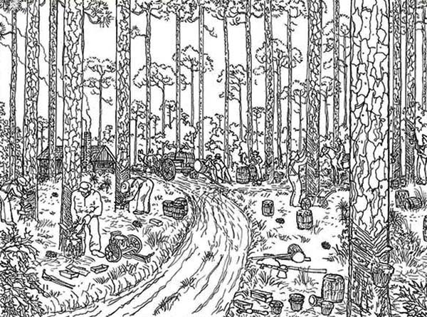 Trees Logging Rainforest Coloring Page Download Print Online