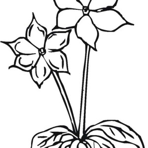 Two Lovely Flower Coloring Page
