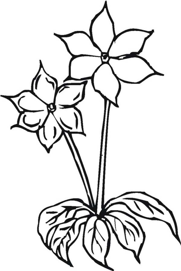 Two Lovely Flower Coloring Page - Download & Print Online ...