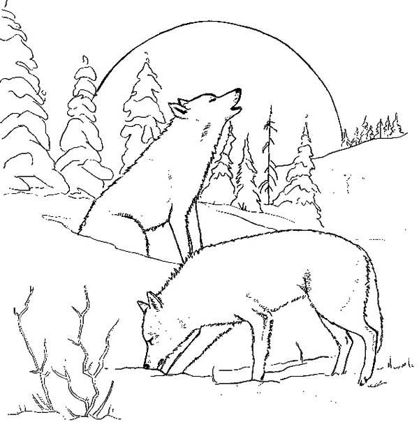 Wolf Couple At Night Coloring Page - Download & Print ...