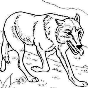 Wolf Hunting For Food Coloring Page