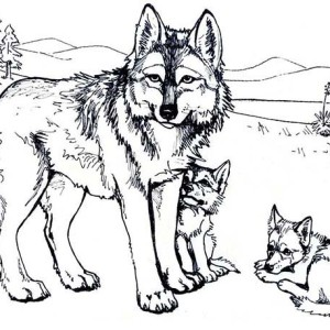 Wolf Mother And Her Cubs Coloring Page
