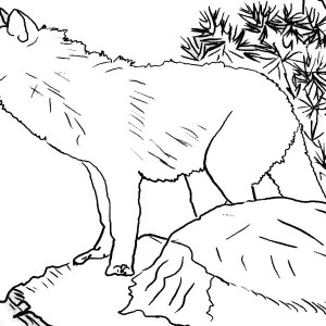 Wolf Up In The Hill Coloring Page