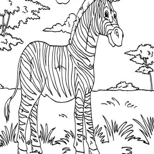 Zebra Rainforest Animals Coloring Page