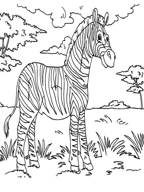 Zebra Rainforest Animals Coloring Page - Download & Print ...