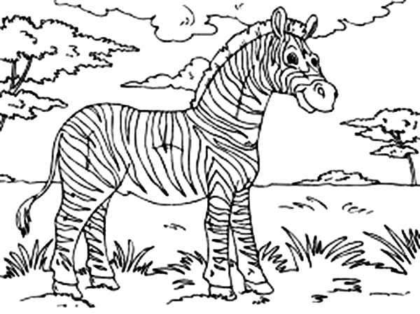 Zebra At The Meadow Coloring Page Download Print Online Coloring