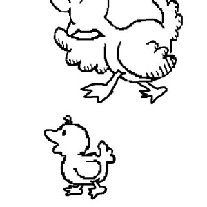 A Duckling Walking With Her Mom Coloring Page