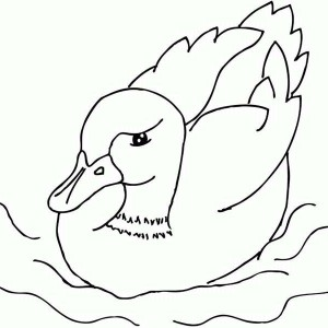 A Mallard Duckling Is Swimming Coloring Page