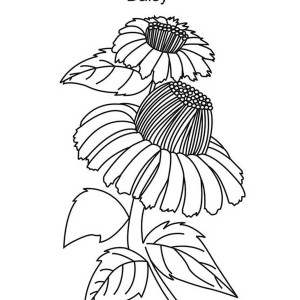 Beautiful Daisy Flower Coloring Page