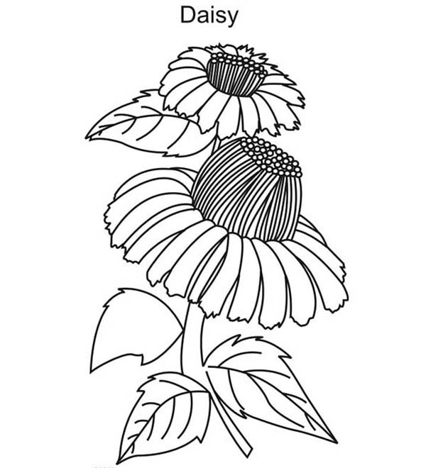 Beautiful Daisy Flower Coloring Page Download Amp Print