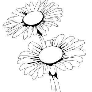 Blooming Daisy Flower Coloring Page