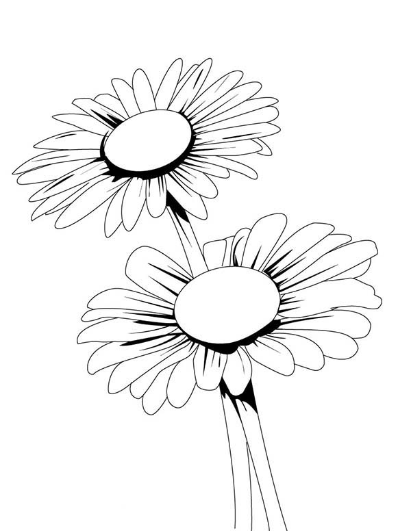 medium daisy flower coloring pages - photo#25