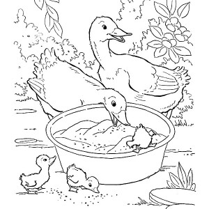 Bunch Of Duckling Eating From Basin Coloring Page