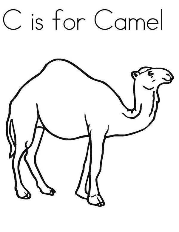 C Is For Camel Coloring Page Download Print Online Coloring
