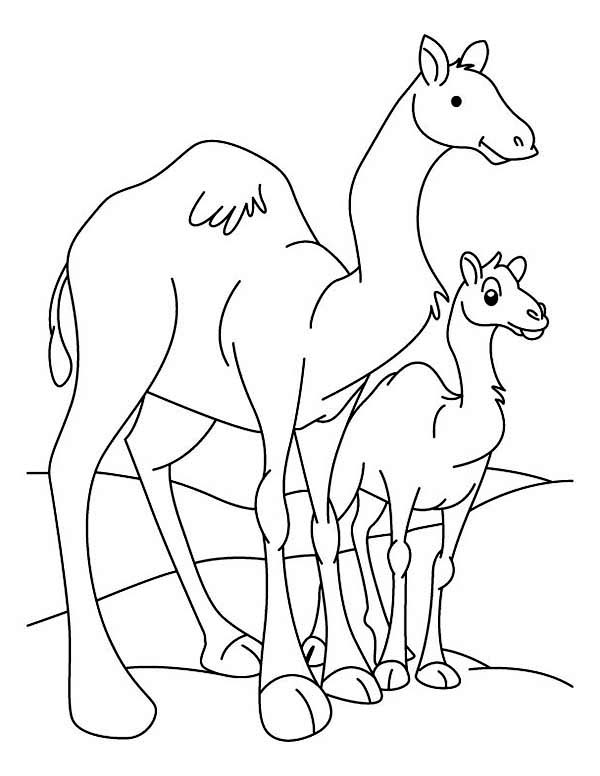 Camel And Baby Camel Coloring Page Download Print Online