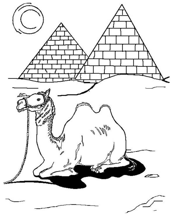 Camel In Egypt Coloring Page Download Print Online Coloring