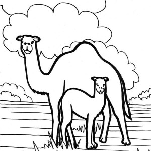 Camel In The Meadow Coloring Page